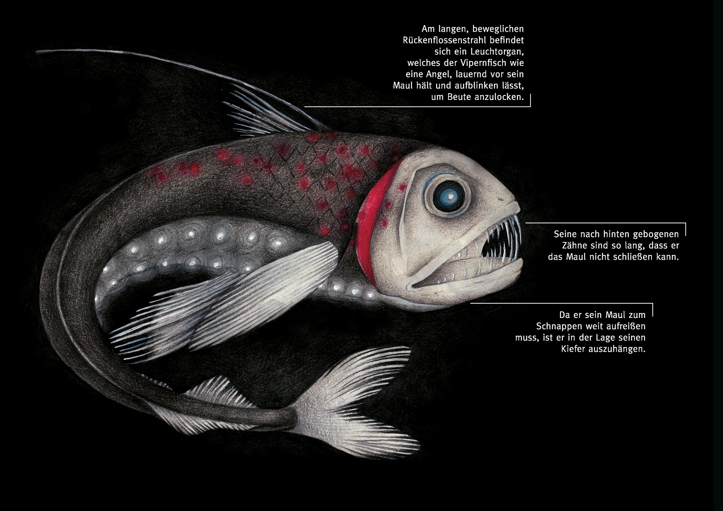 Melanie-Austermann-Meau-Design-Elftausend-Vipernfisch-Wissenschaftsillustration-Buchillustration