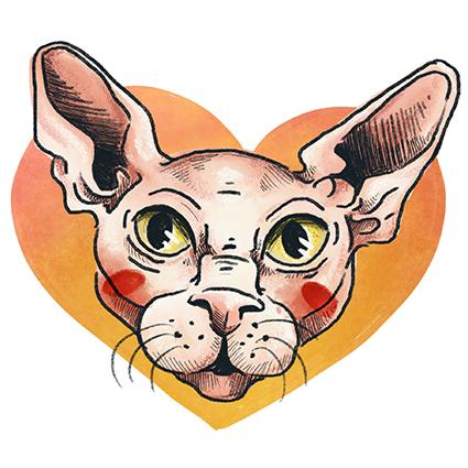 Melanie-Austermann_Meau-Design_Illustration_Grafikdesign_Katzenporträts_Cartoon-Katzen_Sphyx