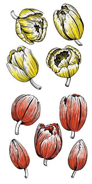 Melanie-Austermann_Meau-Design_Illustrator_Tulpen_gelb_rot_florale-Illustration
